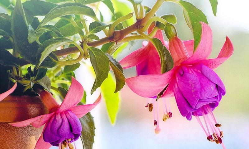 proljece vrt