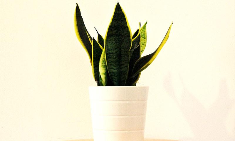 biljke za tamni prostor